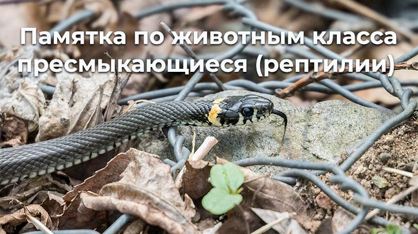 Памятки по животным класса пресмыкающиеся (рептилии)